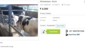 Cows Now Being Sold Online After Govt Ban; MakeMyTrip Cofounder Bashed For Insensitive Remark On Beef